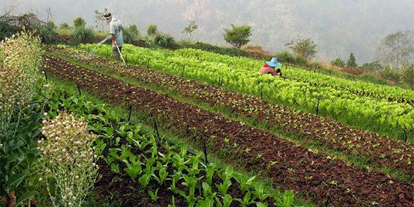 ขั้นตอนการปลุกและประโยชน์พืชหมุนเวียน