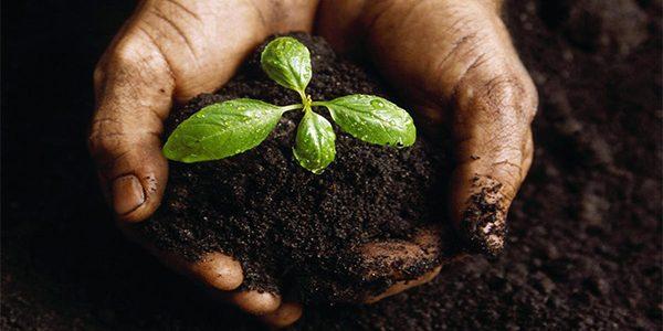 แนะนำการพัฒนาบำรุงดิน