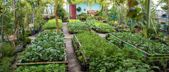 ทำความเข้าใจการเกษตรผสมผสาน คืออะไร