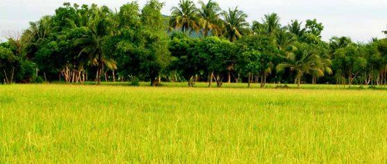 อีกหนึ่งรูปแบบของการเกษตรที่ได้รับความนิยมคือ เกษตรแบบยั่งยืนคืออะไร?