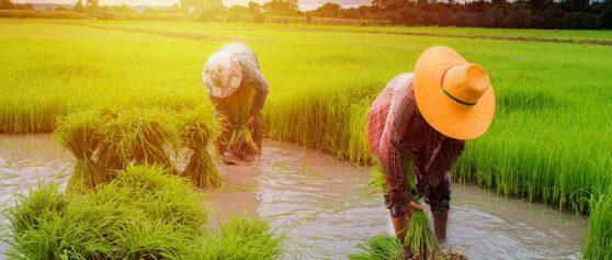 แนะนำการเกษตรทฤษฎีใหม่ที่สามารถเข้าไปใช้ได้จริง