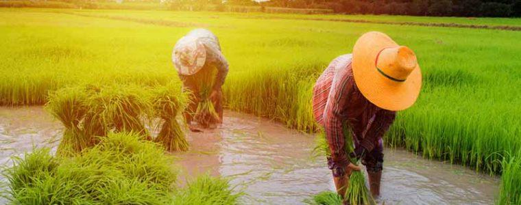 เรียนรู้การเกษตรทฤษฎีใหม่